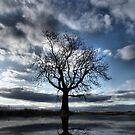 Wintering Oak Tree by Sarah Couzens