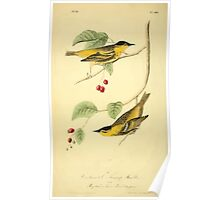 James Audubon Vector Rebuild - The Birds of America - From Drawings Made in the United States and Their Territories V 1-7 1840 - Carbonated Swamp Warbler Poster