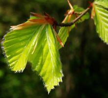 Spring Foliage by Anthony Thomas