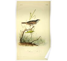 James Audubon Vector Rebuild - The Birds of America - From Drawings Made in the United States and Their Territories V 1-7 1840 - Brown Finch Poster