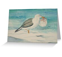 Gull with Sand Dollar Greeting Card
