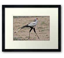 Secretary Bird, Serengeti National Park, Tanzania, Africa Framed Print