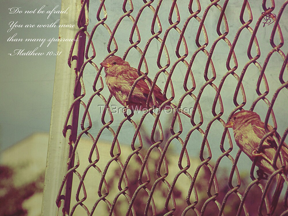 ...more than many sparrows. by Th3rd World Order