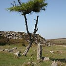 moor tree by paula cattermole