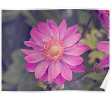 Faded Flower Poster