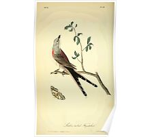 James Audubon Vector Rebuild - The Birds of America - From Drawings Made in the United States and Their Territories V 1-7 1840 - Swallow Tailed Flycatcher Poster