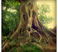 Roots 3/3 by Marc Loret