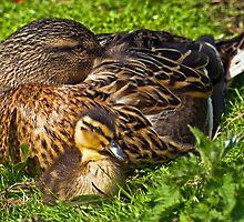 Mother & Baby by Steve  Liptrot