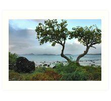 Cruz Bay At Dawn, St. John, USVI Art Print