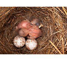 Brand New Chickadees Photographic Print