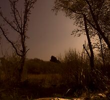 Freshwater Nature Reserve by TanyaDuffy