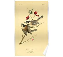 James Audubon Vector Rebuild - The Birds of America - From Drawings Made in the United States and Their Territories V 1-7 1840 - Black Cap Titmouse Poster