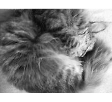 Let sleeping cat's lie[Part One] Photographic Print