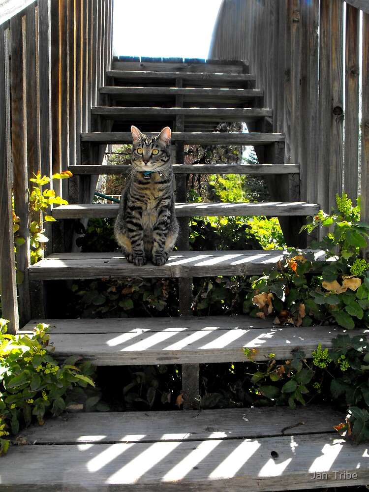 Jasper on the Stairs by Jan  Tribe