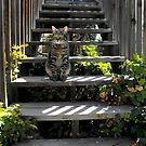 Jasper the Cat by Jan  Tribe