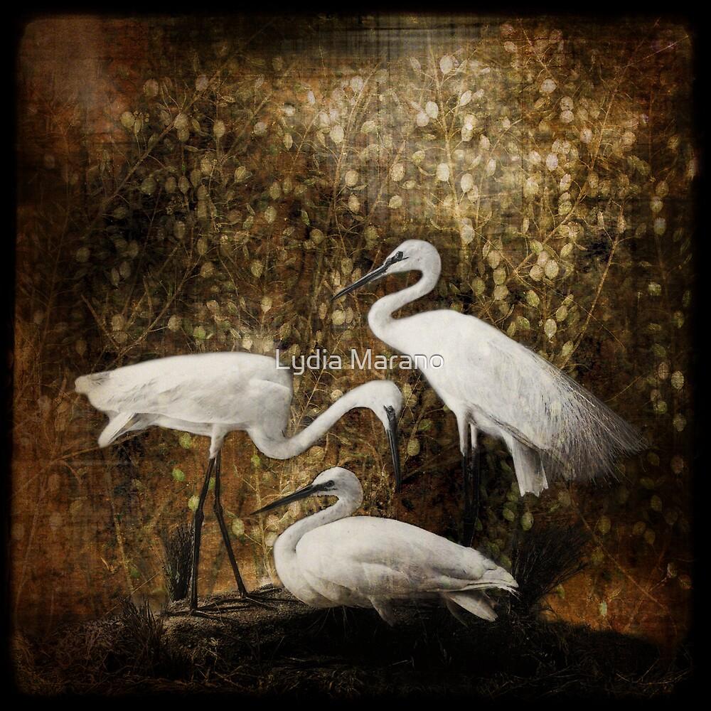 White Cranes by Lydia Marano