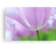 Airy Purple. Tulips of Keukenhof Canvas Print