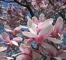 My Magnolia by Marita McVeigh