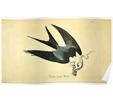 James Audubon Vector Rebuild - The Birds of America - From Drawings Made in the United States and Their Territories V 1-7 1840 - Swallow Tailed Hawk Poster