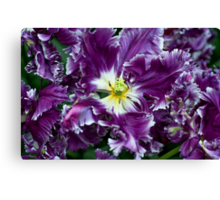 Purple Parrot Tulips of Keukenhof Canvas Print