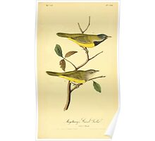 James Audubon Vector Rebuild - The Birds of America - From Drawings Made in the United States and Their Territories V 1-7 1840 - Macgillivray's Ground Warbler Poster