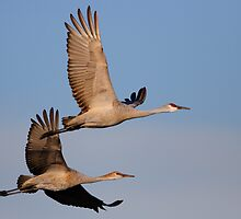 A Loving Couple in Flight by William C. Gladish