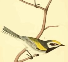James Audubon Vector Rebuild - The Birds of America - From Drawings Made in the United States and Their Territories V 1-7 1840 - Golden Winged Swamp Warbler Sticker