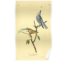 James Audubon Vector Rebuild - The Birds of America - From Drawings Made in the United States and Their Territories V 1-7 1840 - Arctic Blue Bird Poster