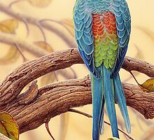 Red-rumped Parrot #2 by Christopher Pope
