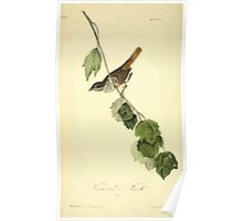 James Audubon Vector Rebuild - The Birds of America - From Drawings Made in the United States and Their Territories V 1-7 1840 - Townsend's Finch Poster