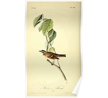 James Audubon Vector Rebuild - The Birds of America - From Drawings Made in the United States and Their Territories V 1-7 1840 - Morten's Finch Poster