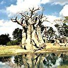 Dead Tree By Water by terrebo