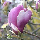 """""""Tulip Tree Blossom"""" by Lynn Bawden"""
