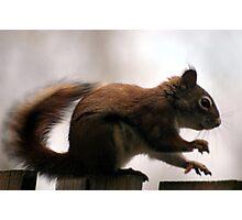 Squirrel Paws Photographic Print