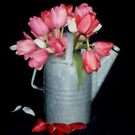 A Pitcher Of Tulips by trueblvr