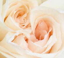 A Double Hearted Romantic White Rose by taiche