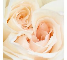 A Double Hearted Romantic White Rose Photographic Print