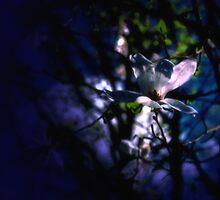 Night Flower by Mallorn