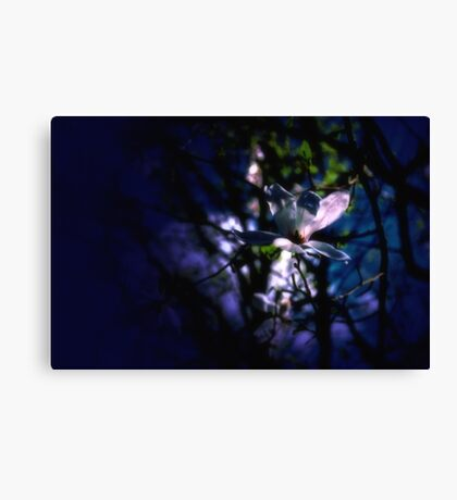 Night Flower Canvas Print