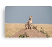 King of the Hill Canvas Print