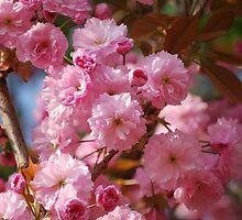Pink Spring by Rowan  Lewgalon