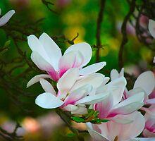 Magnolia by Rowan  Lewgalon