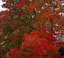 Autumn Leaves by Michael Eyssens