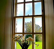 Flowers in a Window by Larissa  White Brown