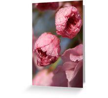 cherry blossum. Greeting Card