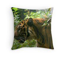 Sumatran Tiger paces before dinner Throw Pillow