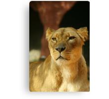 Lioness 2 Canvas Print