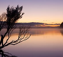 Pastel Dawn by Travis Easton