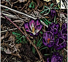 Crocus 2. by Adrian Matthews