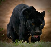 Black Jag by kkgivens